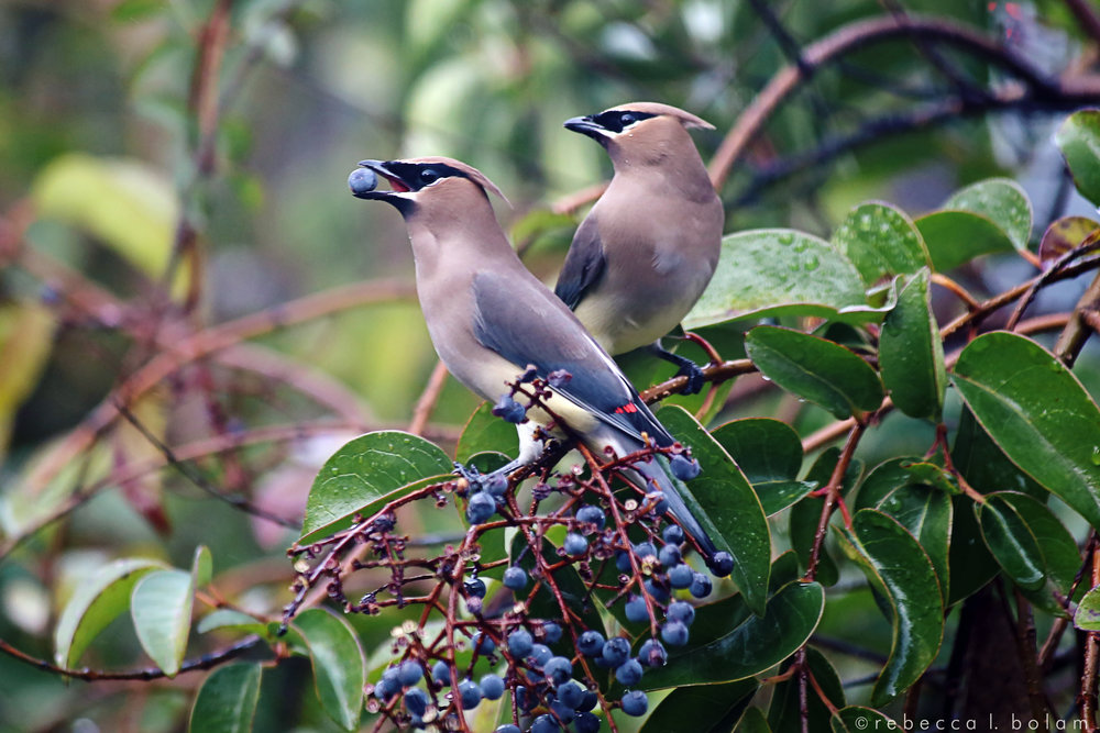 Birds in Front Tree Having Lunch.jpg