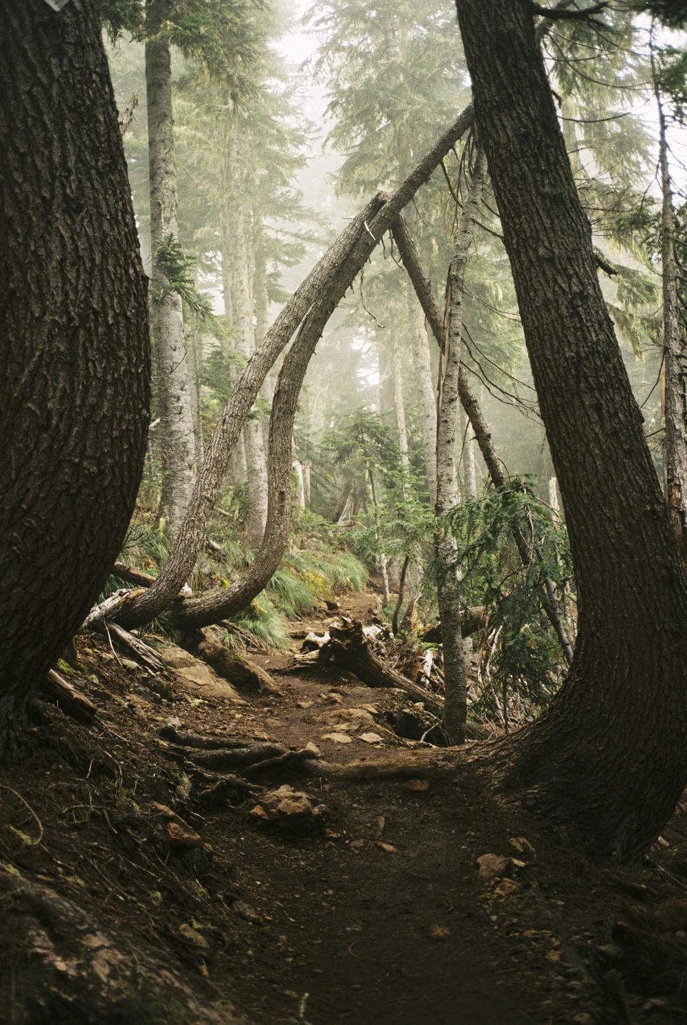 Oregon2015-04-2.jpg