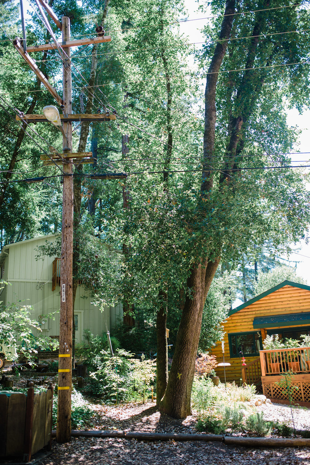 Yellow spray-painted Xs adorn trees selected for removal