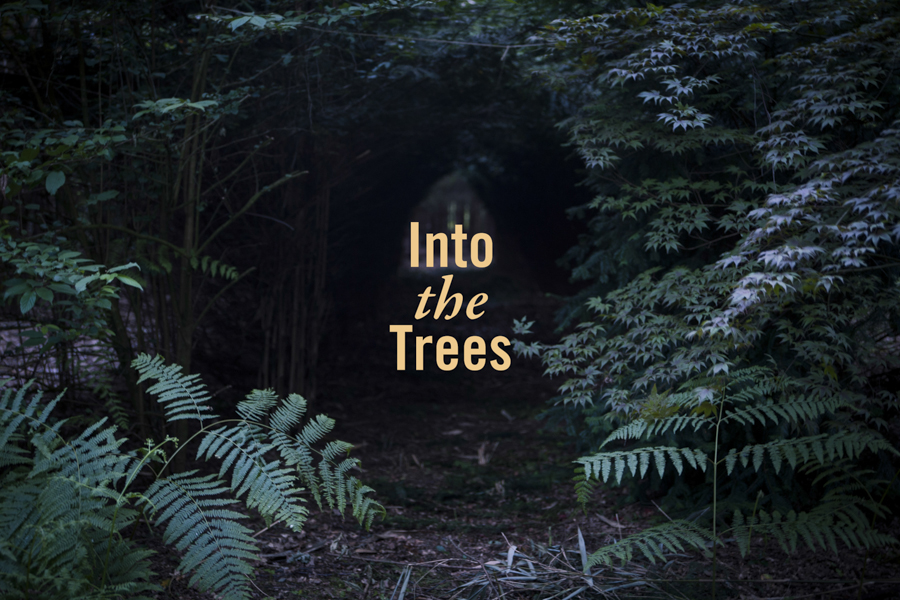 into the trees promo-7.jpg