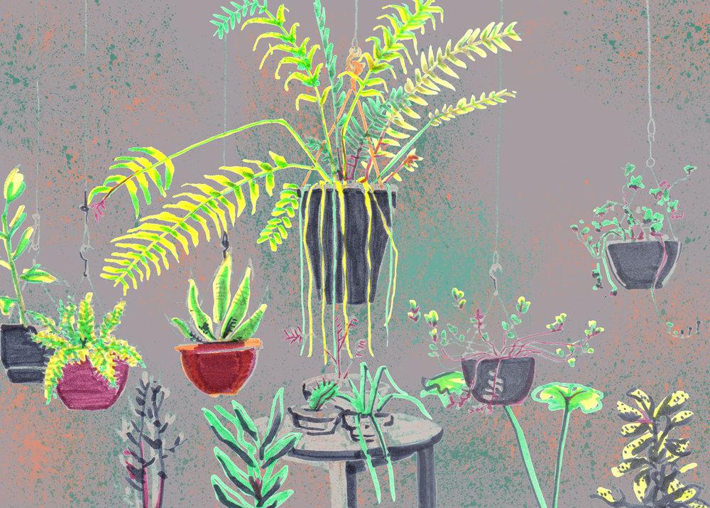 plantas-escuela-minuscula-2.jpg