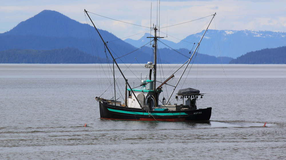 "The ""Astri"" making a turn near Wrangell."