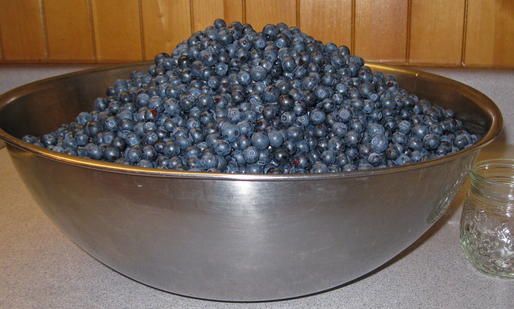 Blueberries bowl Alaskan blueberries