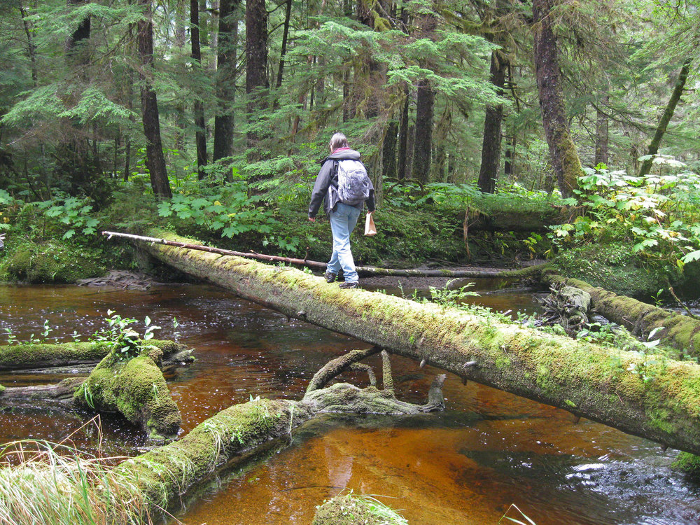Creek crossing bridge log Southeast Alaska forest