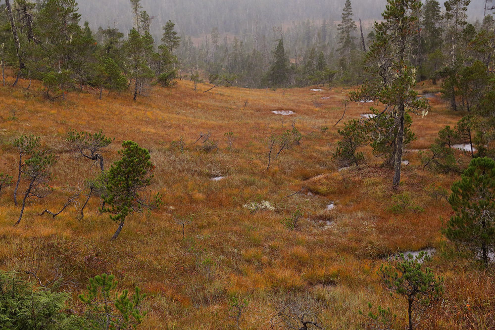 Muskeg fall colors Southeast Alaska