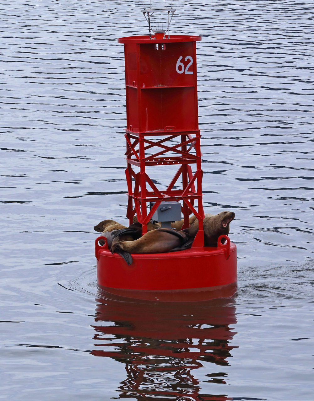 Sea lions napping on a buoy