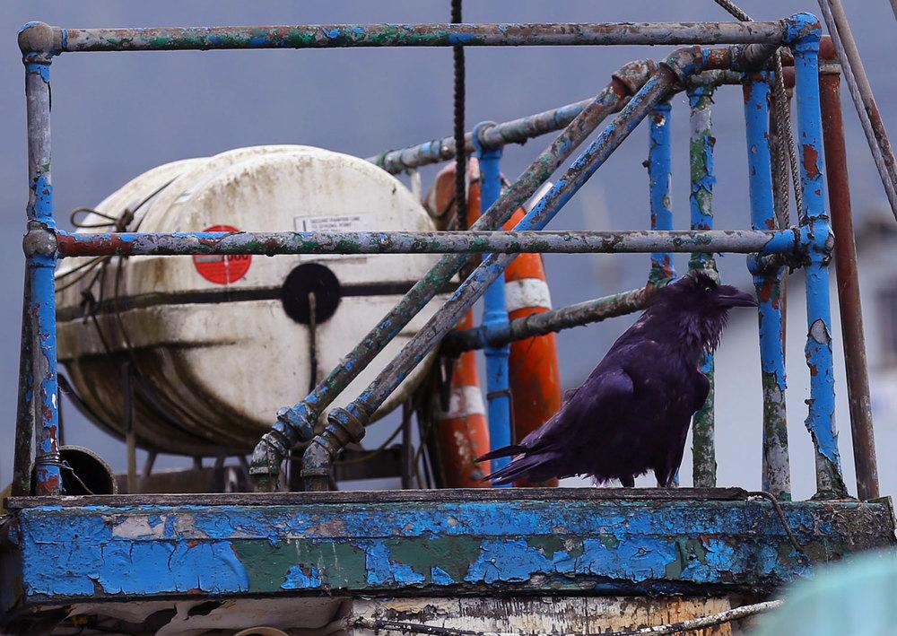 Halloween raven boat peeling paint
