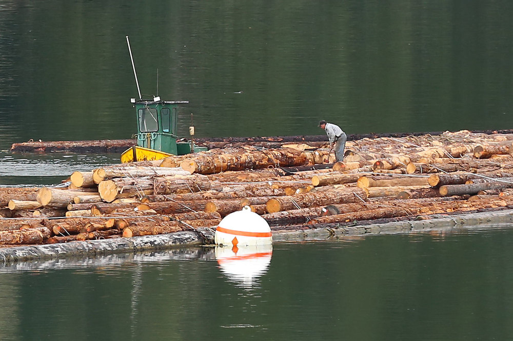 A green and yellow boom boat tied to a log raft. There are cedar, spruce, and hemlock bundles in this log raft.
