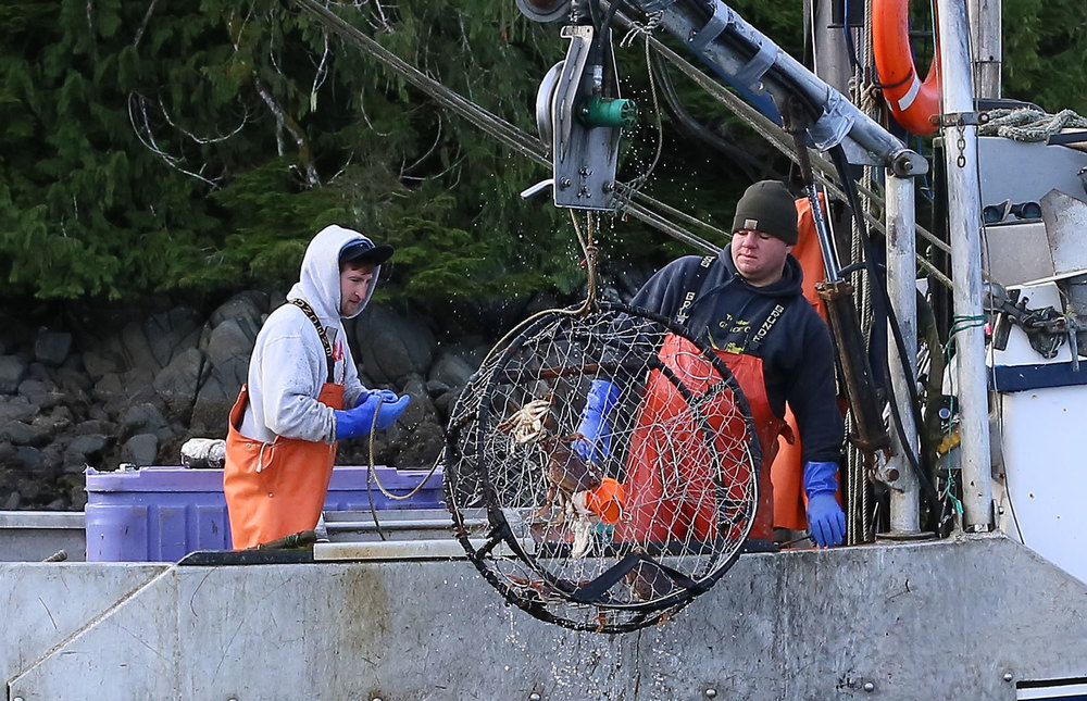 Dungeness_crab_commercial_fishing_2065.jpg