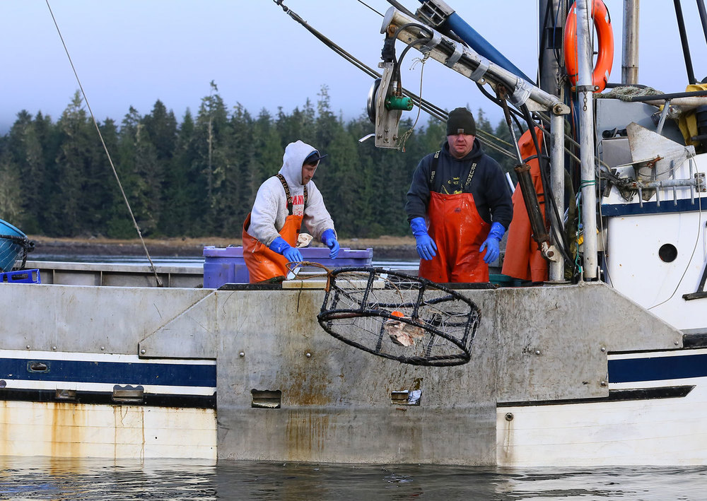 Dungeness_crab_fishing_2086.jpg