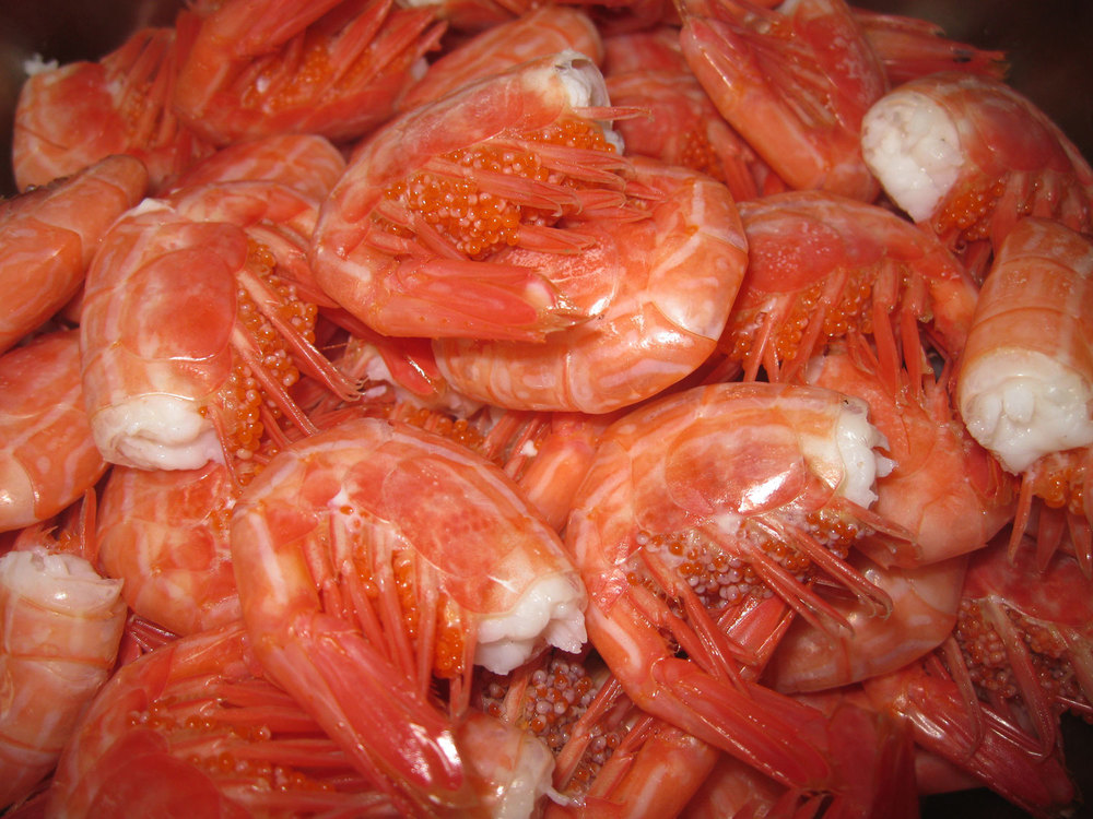 Cooked shrimp tails.