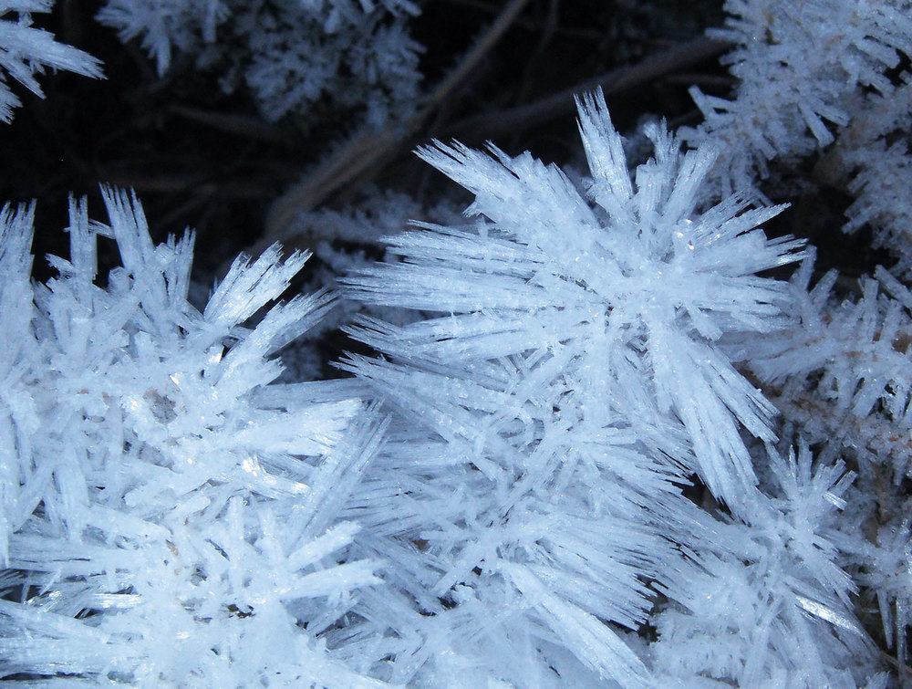 Frost spicules hoarfrost crystals Southeast Alaska