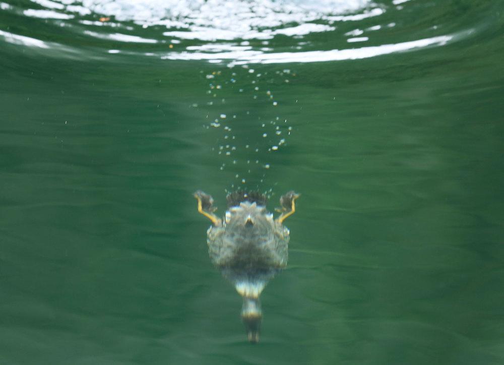 J  ust Ducky