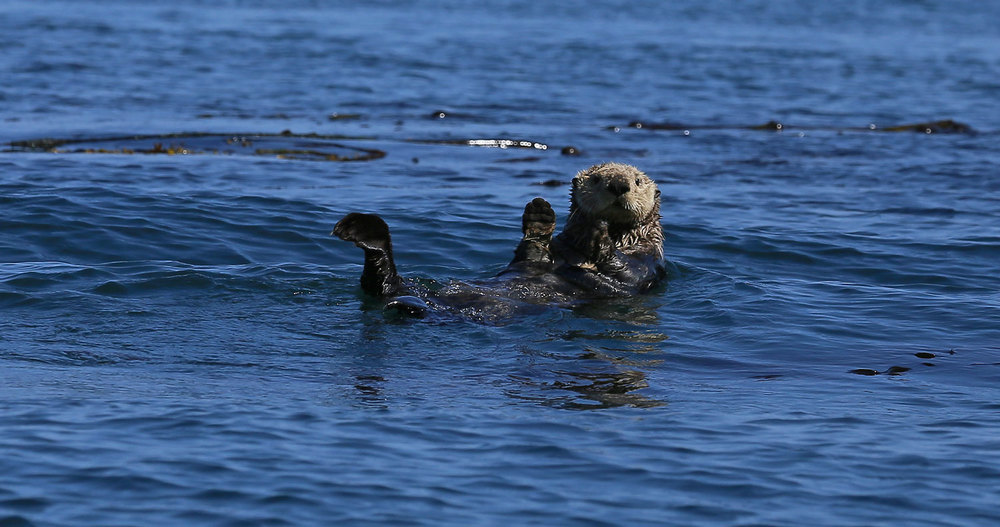 Sea Otters, Seals, and an Eagle