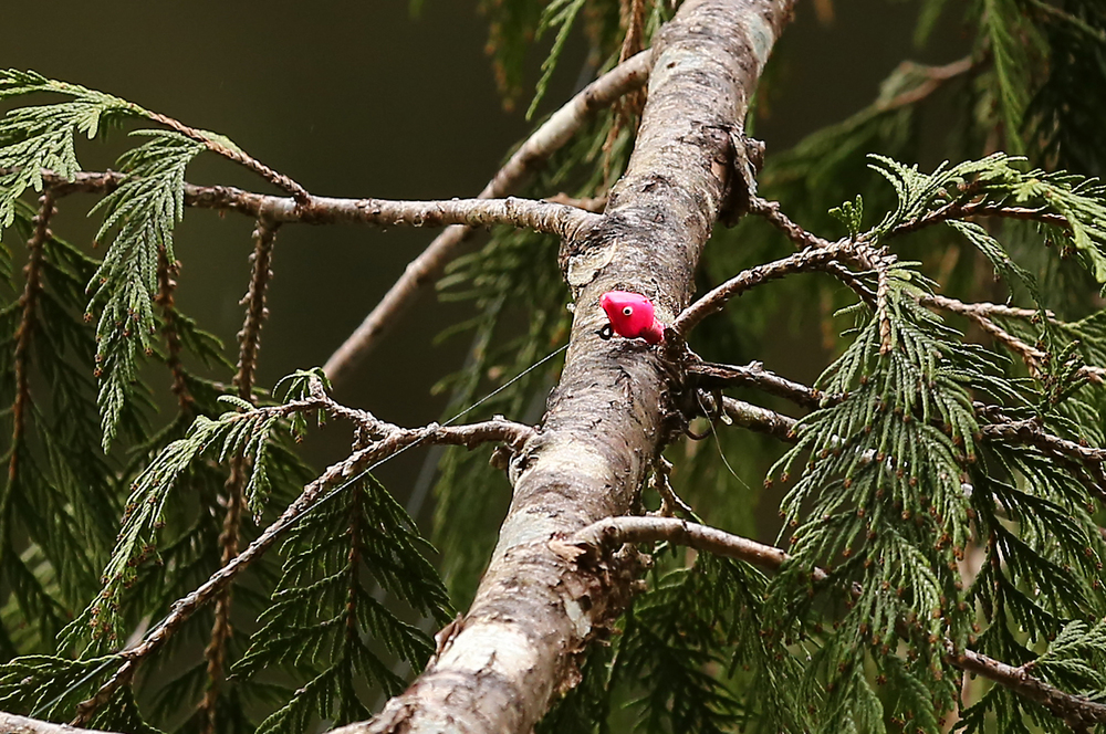 fish fishing lure hung up in tree branch