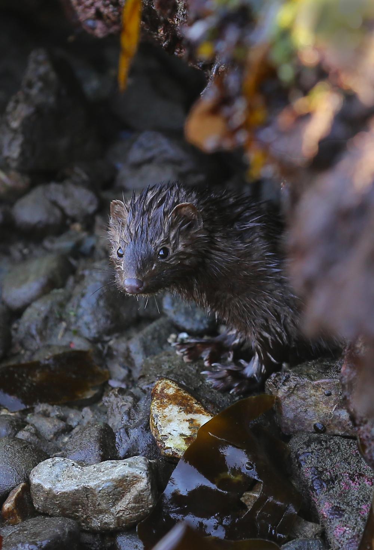 Mink cave beach seaweed kelp Southeast Alaska
