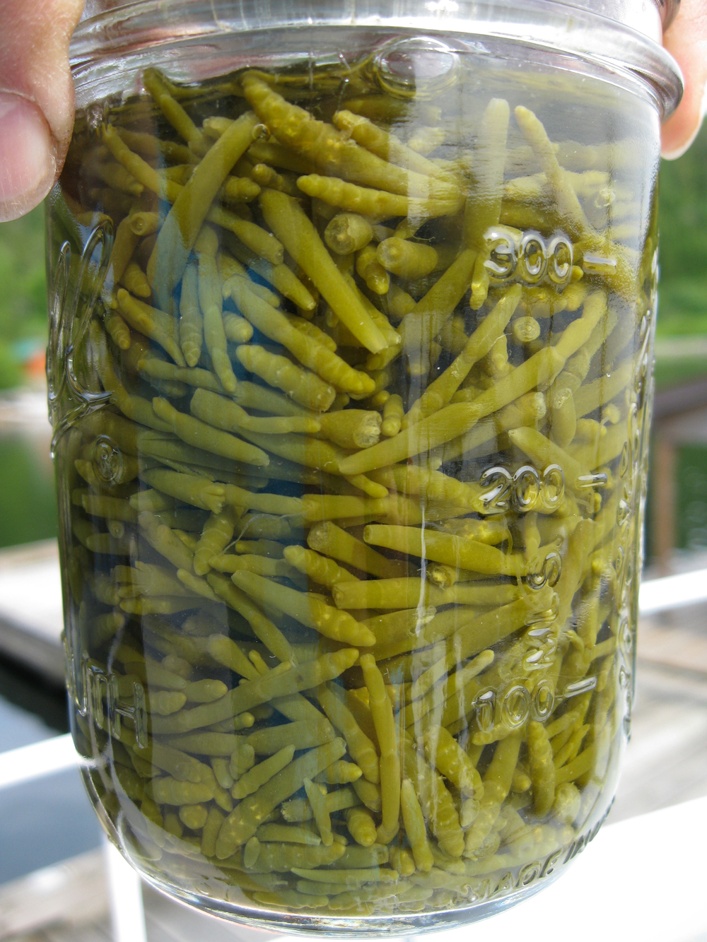 Canned beach asparagus takes on an olive-green color.