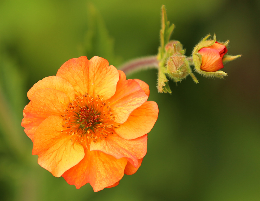 Pretty orange flowers