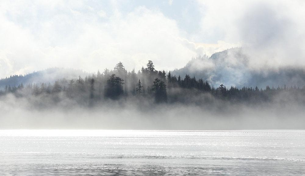 Fog in the trees water ocean mist
