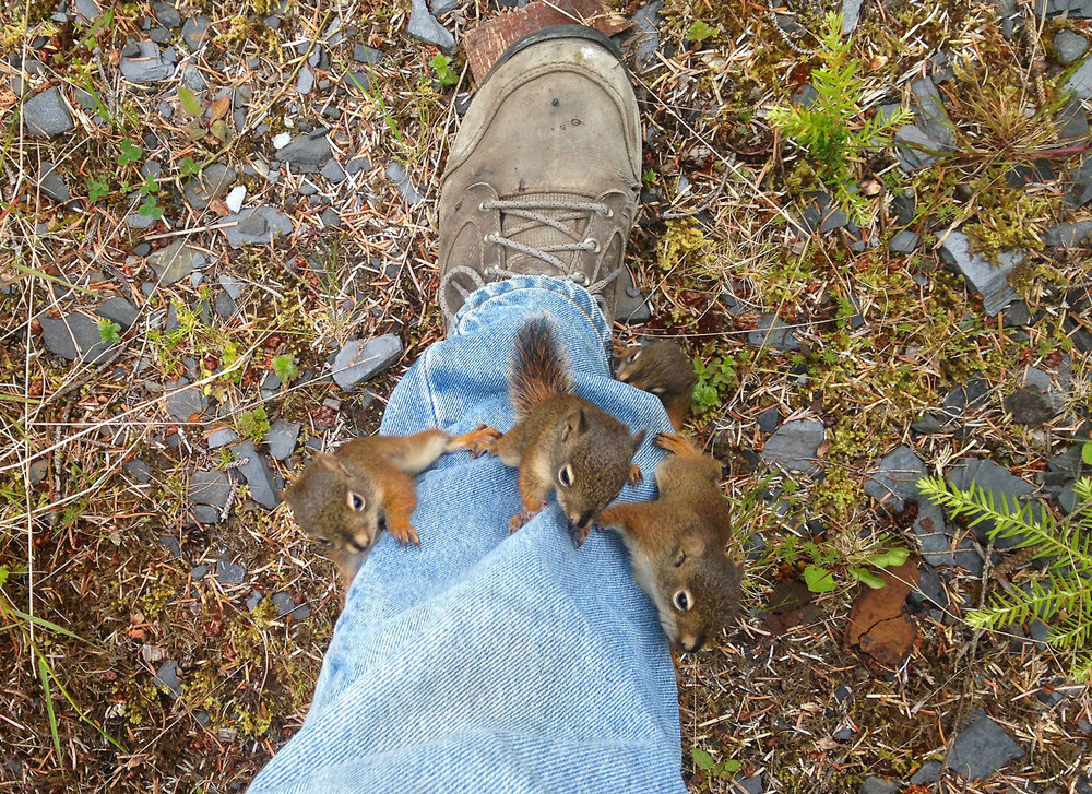 Baby squirrels climbing my leg blue jeans tree Wrangell Southeast Alaska super cute funny
