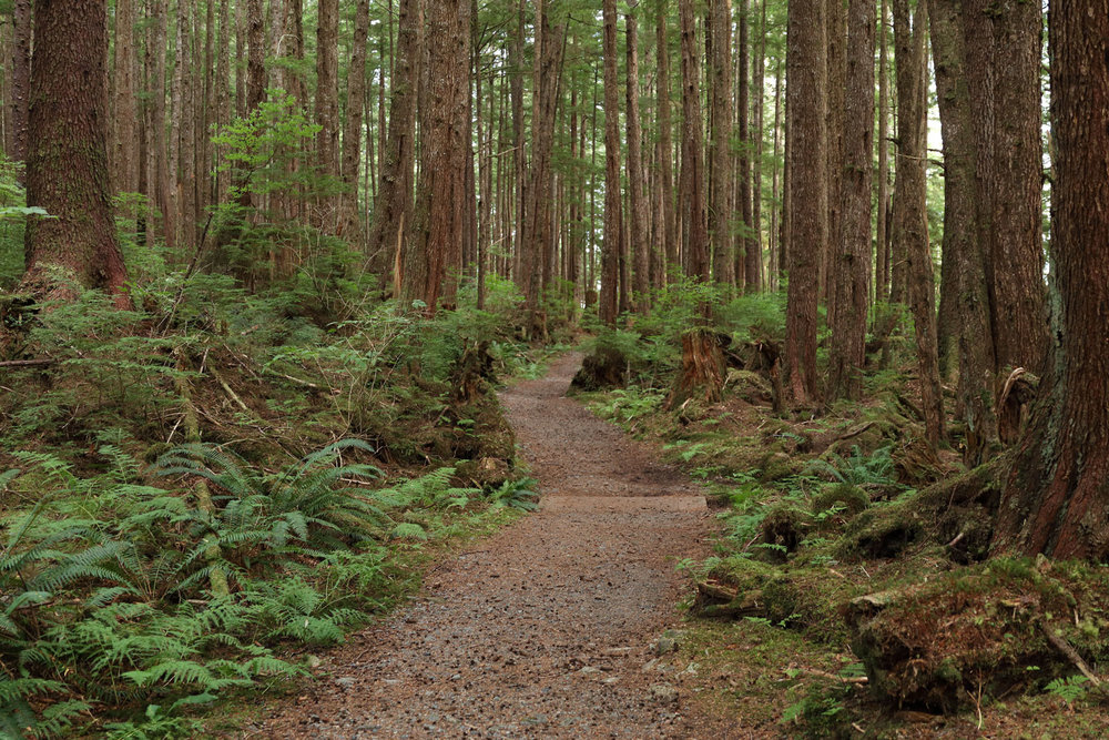 The pretty Totem Trail from Kasaan to the Whale House is well groomed and easy.