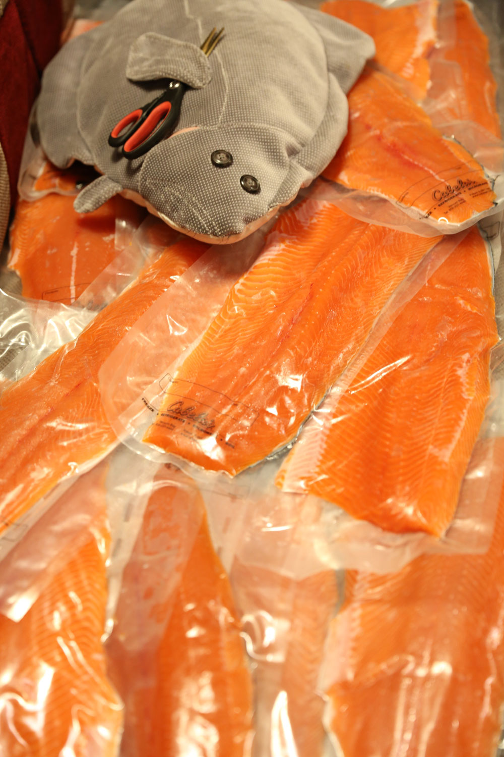 Halibut with scissors to open the vacuum packed salmon