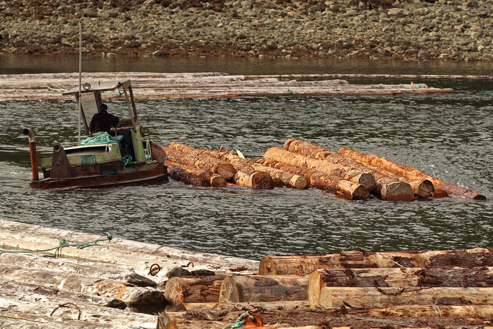 Boom boat sidewinder log bronc handling log bundles Prince of Wales Island Southeast Alaska
