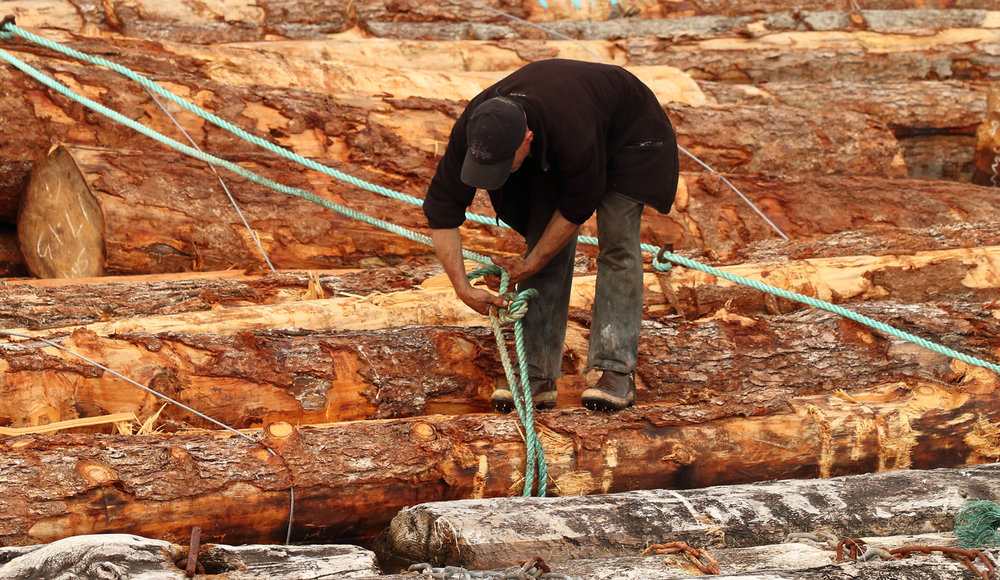 Logging boom man tying a line on Prince of Wales Island Southeast Alaska