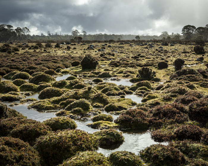 Tasmania Wilderness Landscape Photograph - By Steven Pearce
