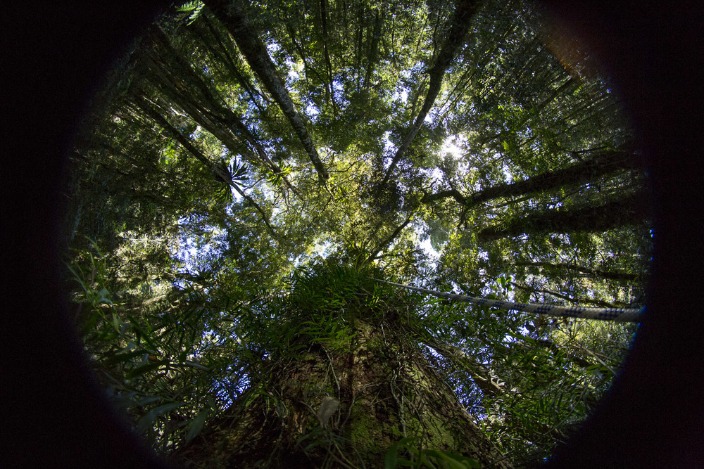 Hemiview photography incorporates a 180 degree view of the sky using a special camera lens. The prime goal of Hemiview photos is to discover, with the aid of a modelling program, the amount of light penetrating through the canopy.