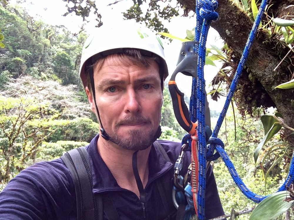 Up a tree in Panama 2014