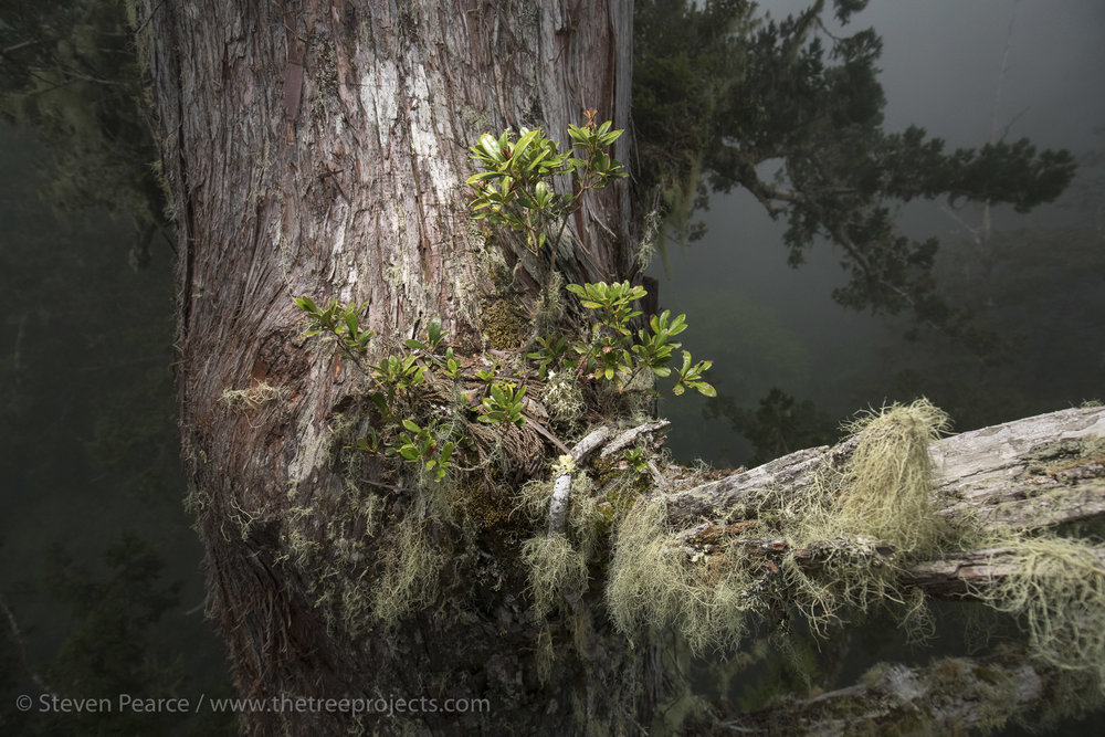 SPPhoto-WEB-2017-05-05-_5D41477.jpg