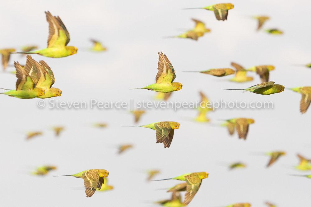 SPPhoto-WEB-20121120-_D3_9343-Edit-2.jpg