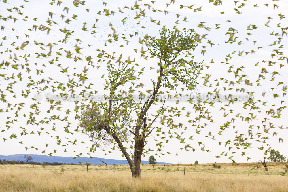SPPhoto-WEB-20121121-_D3_1131.jpg