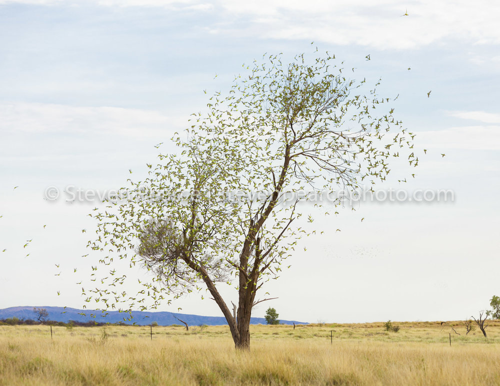 SPPhoto-WEB-20121121-_D3_1134-Edit.jpg