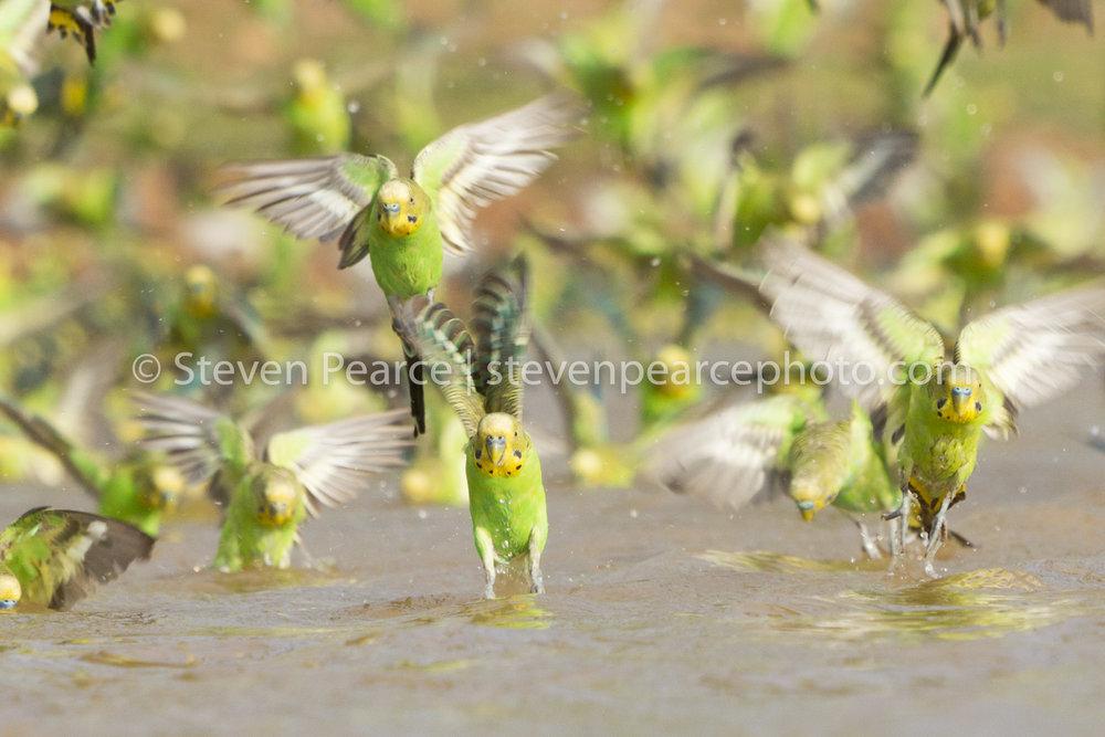 SPPhoto-WEB-20121122-_D3_2306-Edit.jpg