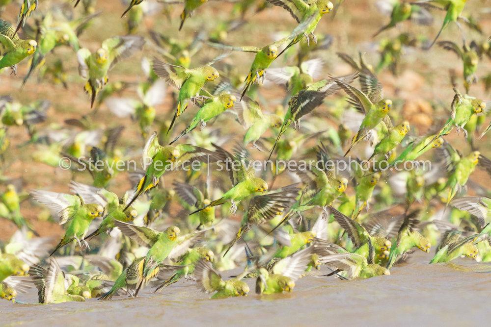 SPPhoto-WEB-20121122-_D3_2274.jpg
