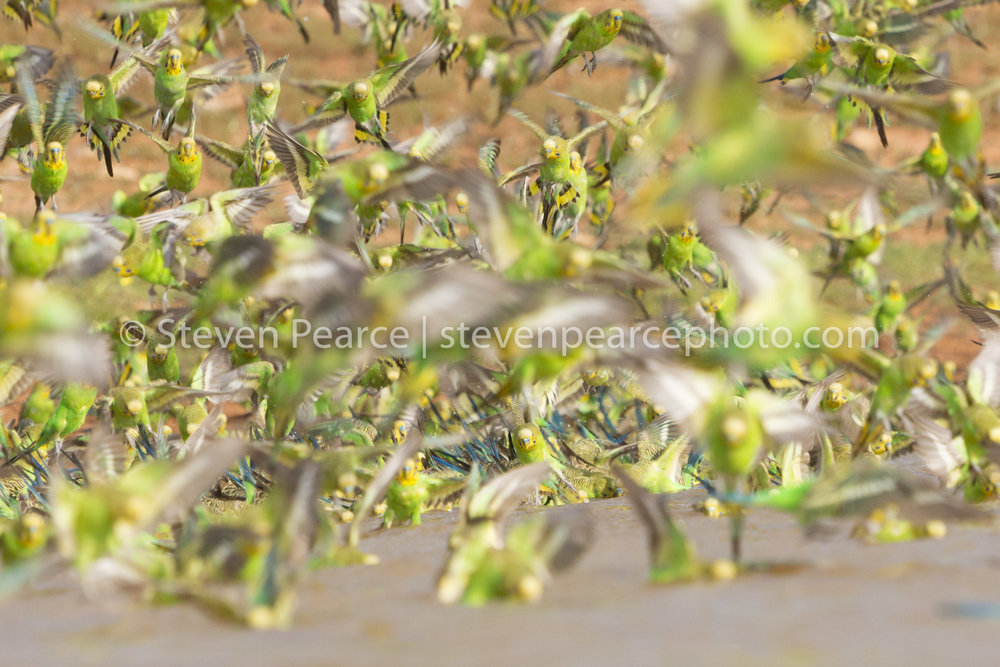 SPPhoto-WEB-20121122-_D3_2309-Edit.jpg