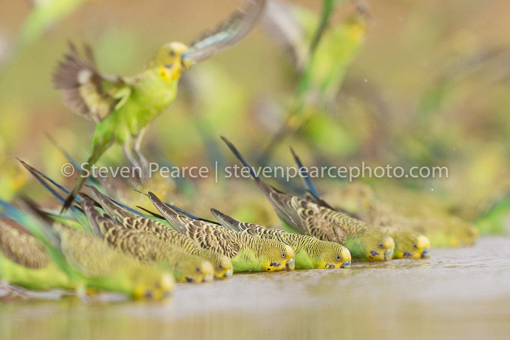 SPPhoto-WEB-20121123-_D3_3239-Edit.jpg