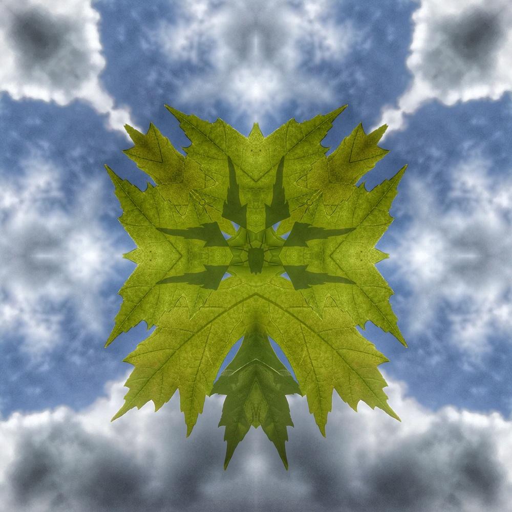 Spring Leaf Project v1.1