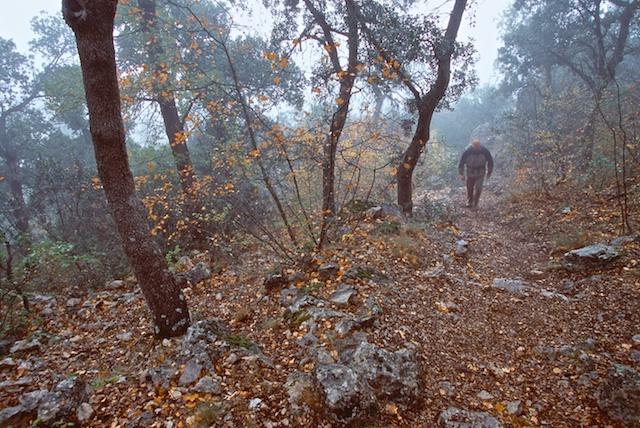 Fotografías de Alicante. Parque Natural de la Font Roja. © Daniel Belenguer