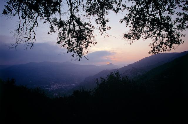 Holm oak in Alto Mijares mountains, Castellón. Spain. © Daniel Belenguer