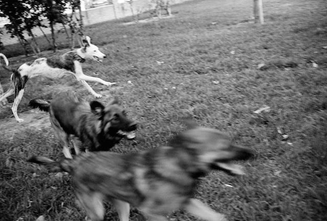 Perros en el parque, a 1km de casa...© Daniel Belenguer