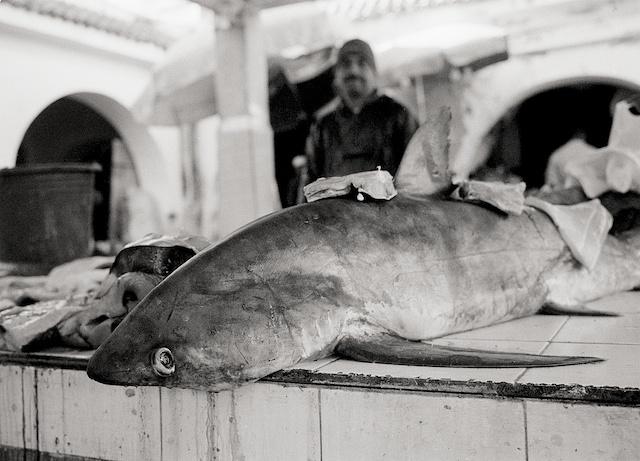 Mercado de Essaouira. © Daniel Belenguer
