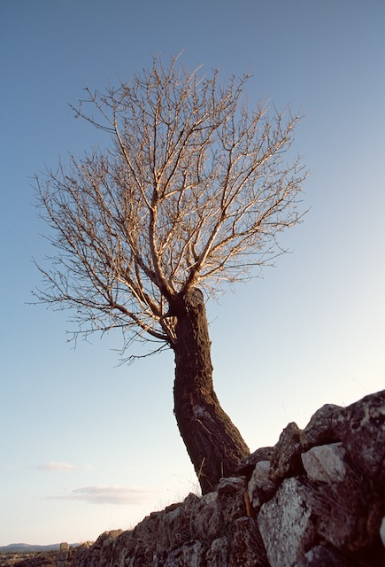 Spain pictures.Almond tree in winter. Fuentelespino de Moya. Cuenca. © daniel belenguer