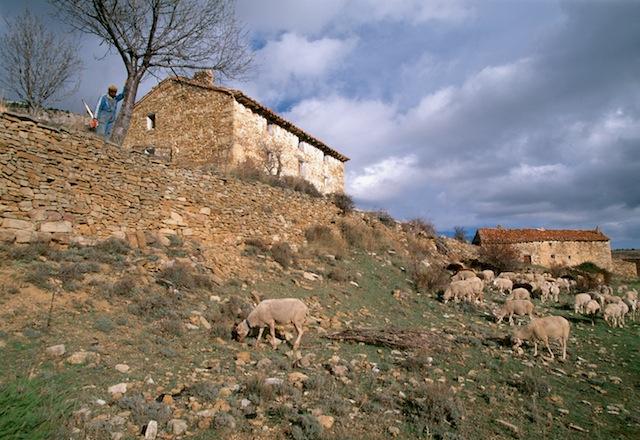 Pastor y rebaño junto a Masía, en algún punto de la Sierra de Gúdar. © Daniel Belenguer