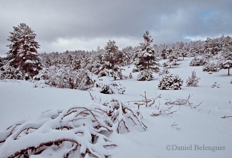 Paisaje nevado en el Rincón de Ademuz © Daniel Belenguer