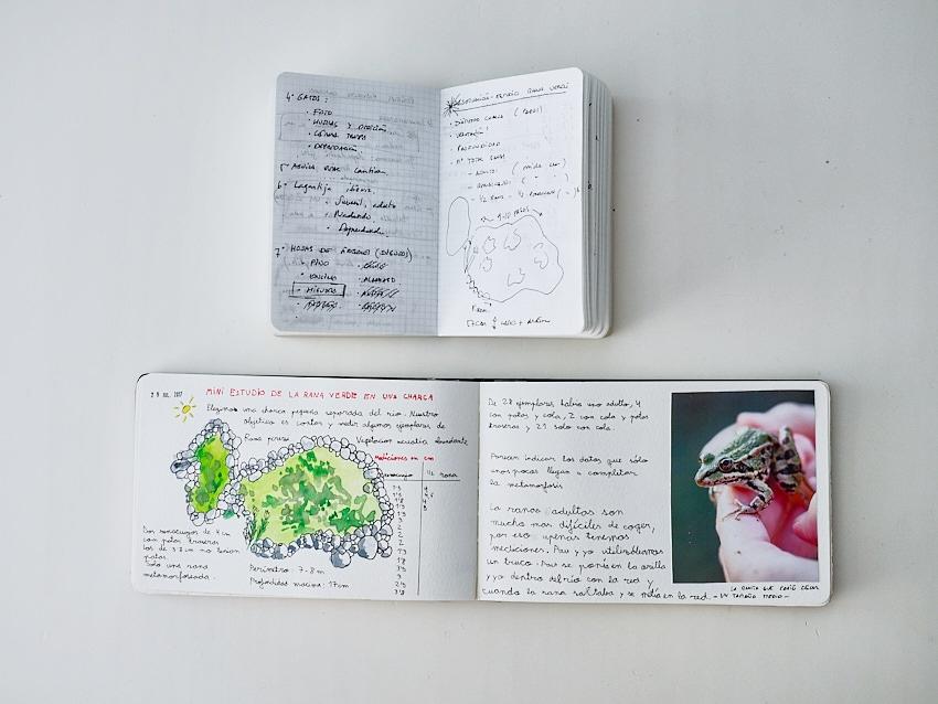 """© Daniel Belenguer. Un ejemplo: en el cuaderno en sucio anoté este posible pequeño proyecto que era hacer un mini estudio de una charca, con mediciones de ranas y renacuajos. En el cuaderno """"limpio"""" es donde pegamos la foto y pasamos a limpio las observaciones de campo."""