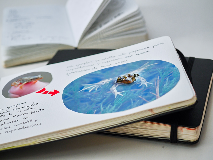 © Daniel Belenguer. Los cuadernos moleskine incorporan además una goma elástica muy adecuada para mantener y conservar el cuaderno, máxime cuando hay elementos pegados.