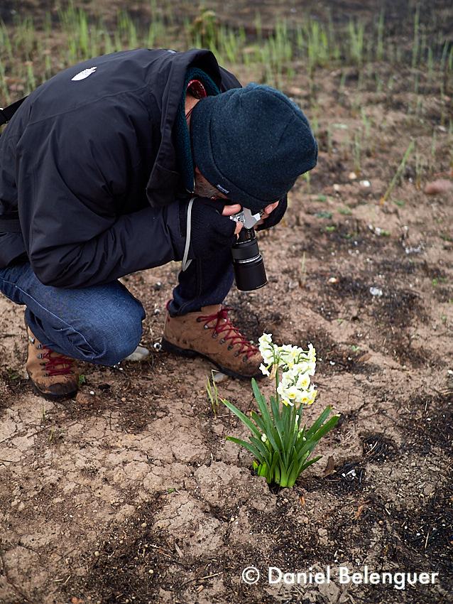 Manolo fotografiando los narcisos (creemos que es la especie Narcissus tazetta).